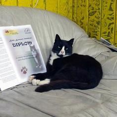 Kass Korsaari lennukool Ridalis